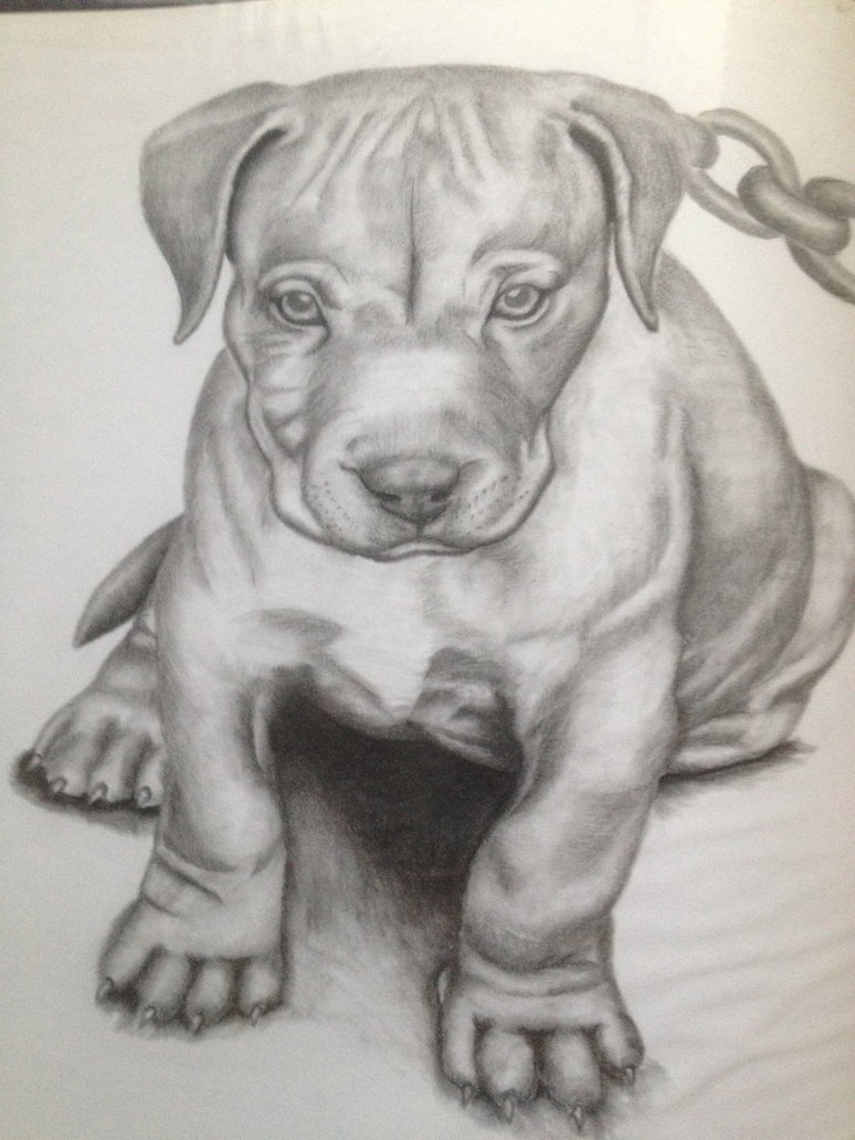Realistic Puppy Drawing at GetDrawings com | Free for