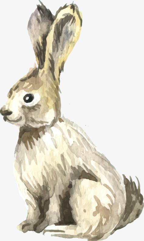 474x791 Drawing Realistic Rabbit, Drawing Realism, Rabbit, Drawing Vector