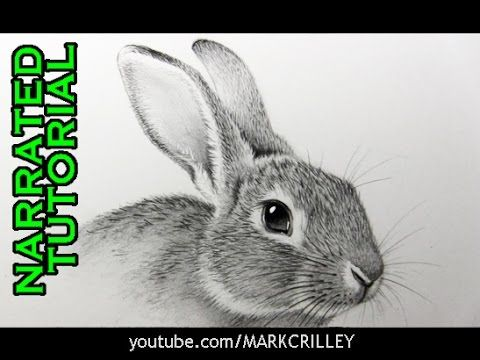 480x360 How To Draw A Rabbit Narrated, Step By Step