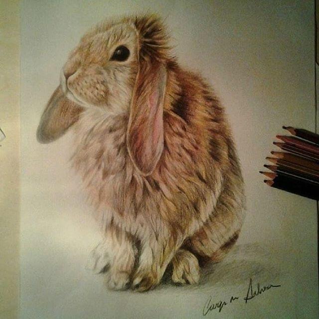 640x640 Little Rabbit
