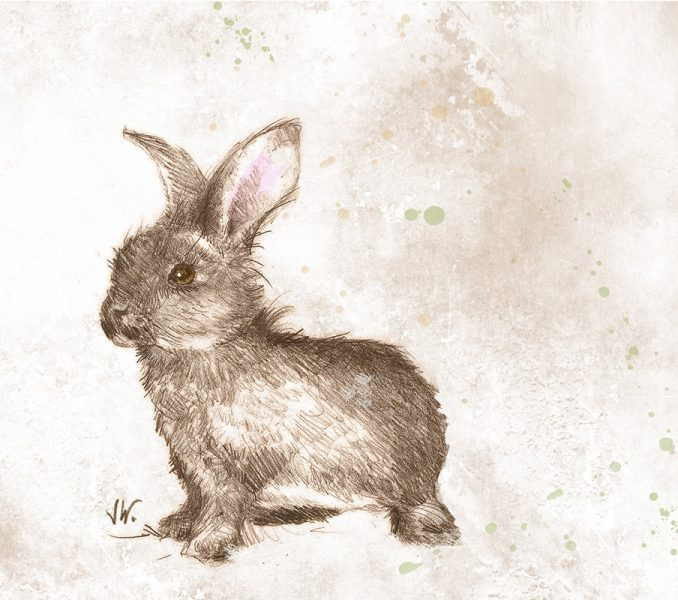 678x600 Realistic Bunny Kids Coloring
