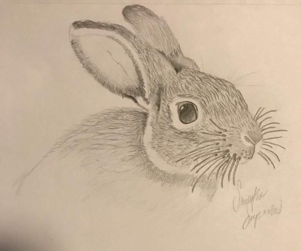 1024x855 Realistic Rabbit Drawing. Animal Amino