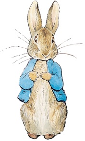 177x292 Website Design Rabbit Drawings