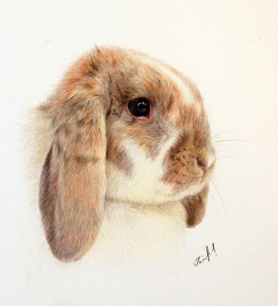900x991 Colourful Rabbit Artworks