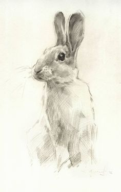 236x376 Drawings Of Rabbits And Bunnies Rabbit Realism By Grouchywolfpup
