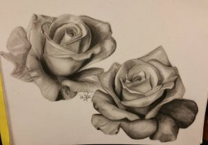 300x210 Realistic Rose Pencil Sketches Gallery Pencil Drawing Rose