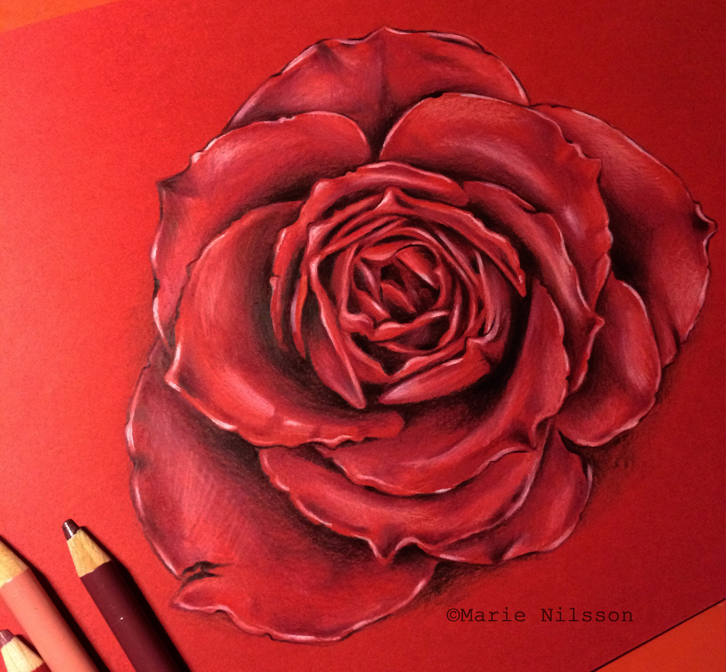 2448x2264 Realistic Rose Study By On @