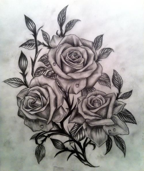 500x595 Rose Drawing