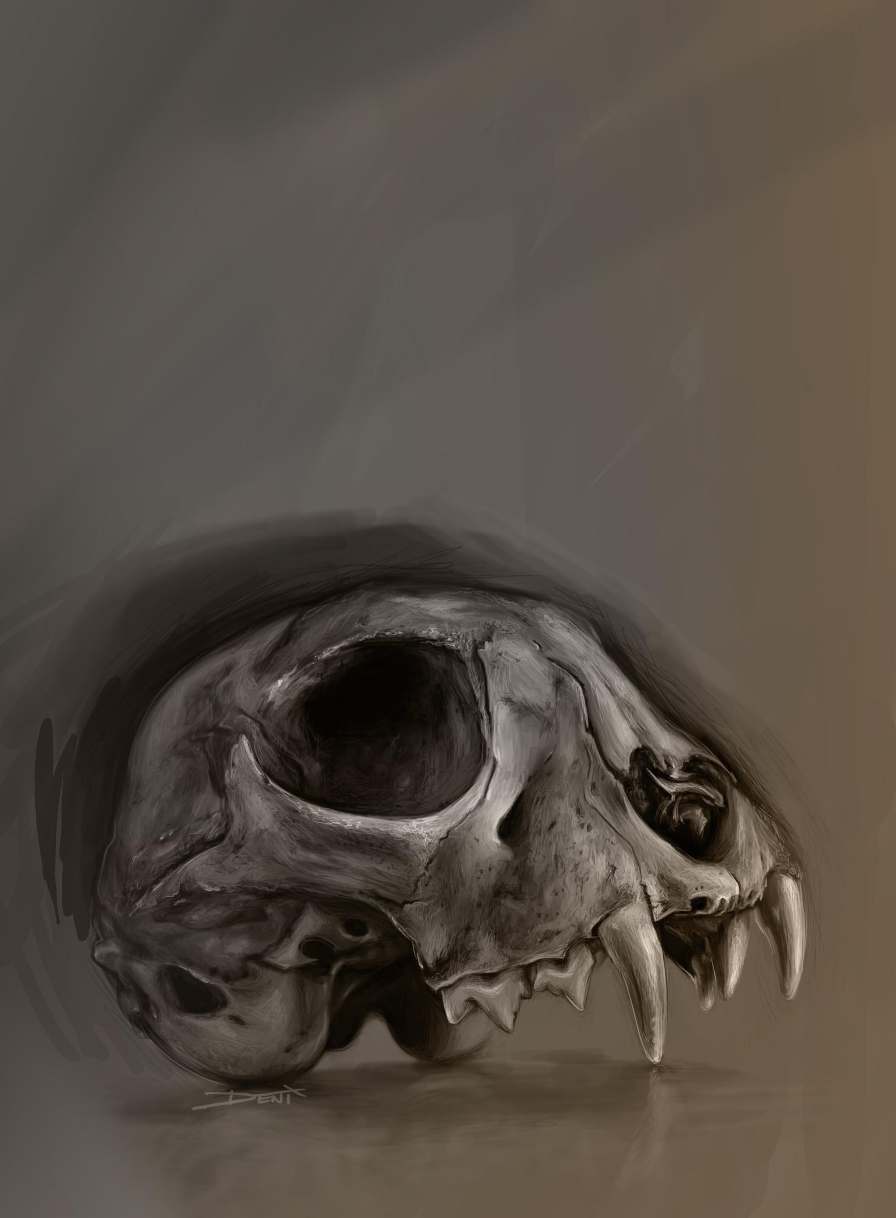 1810x2460 Animal Skull Study.
