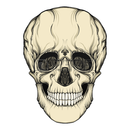 450x450 Human Skull Realistic Hand Drawing Isolated Stock Line Vector