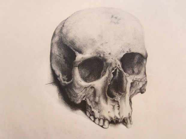 620x465 Photos Realistic Skull Drawing,