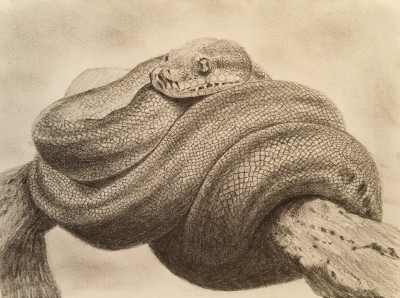 how to draw 3d snake