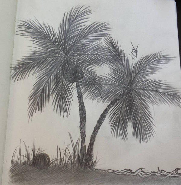 600x612 9 palm tree drawings