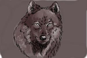 300x200 How To Draw A Realistic Wolf
