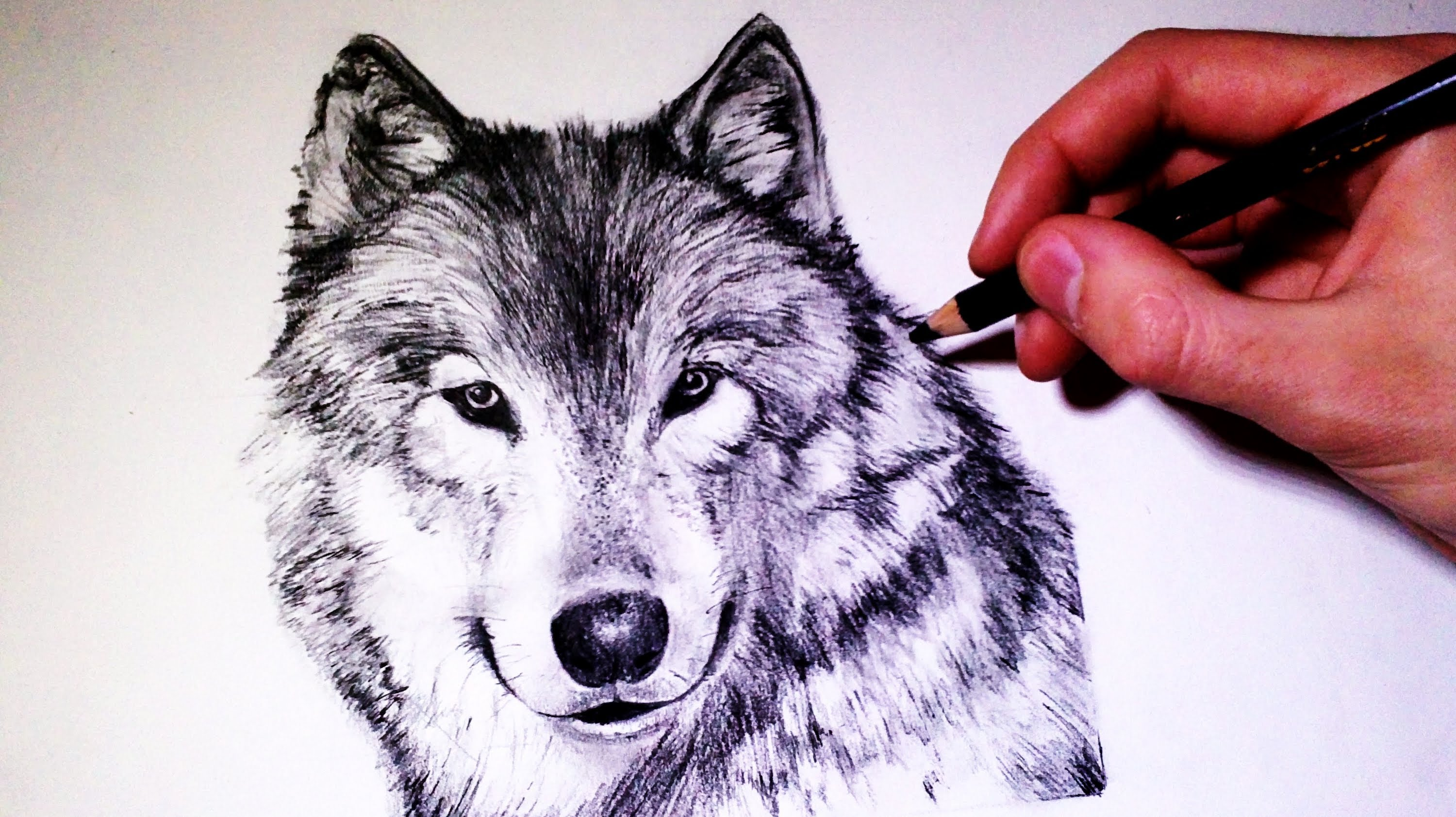 3000x1683 How To Draw A Realistic Wolf
