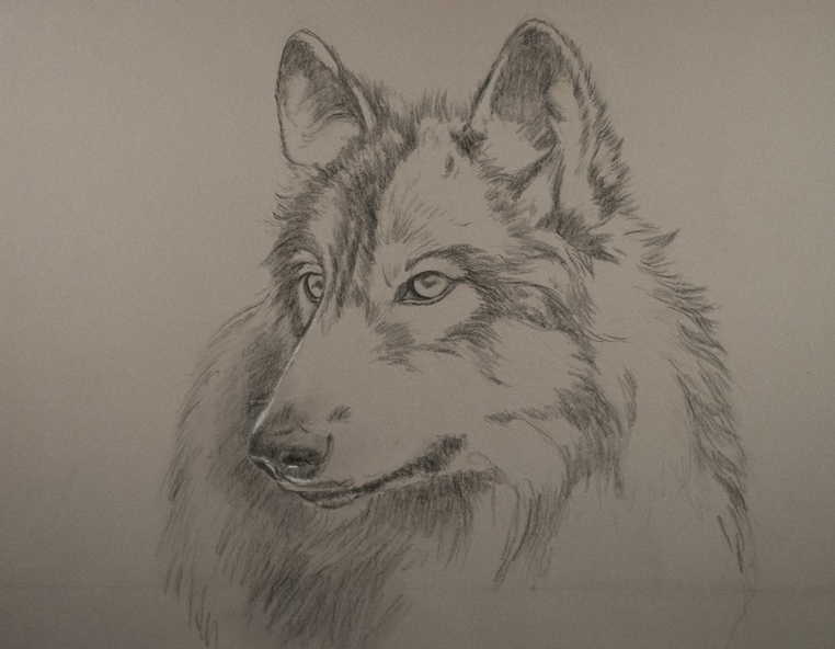 762x592 New Painting With Pastel Pencils Wolf Portraits