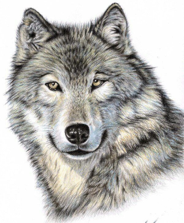 600x729 Pin By Diane Kuc On Dog Artists Wolf, Tattoo And Animal