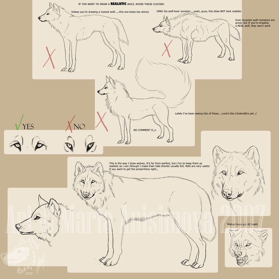 Realistic Wolf Drawing Step By Step At Getdrawings Free For