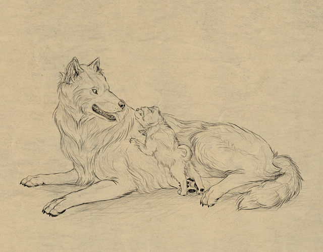 640x500 How To Draw Animals Dogs And Wolves, And Their Anatomy