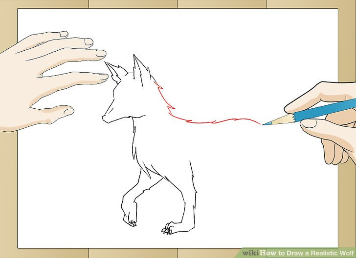 728x529 How To Draw A Realistic Wolf (With Pictures)