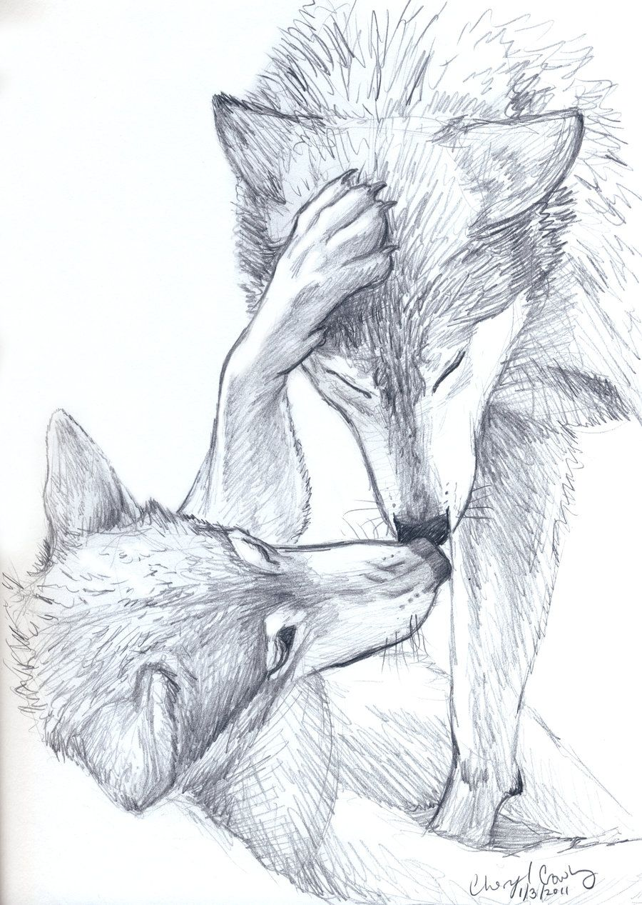 900x1267 Wolves Sketch By Silvercrossfox How To Draw Wolves, , How To Draw