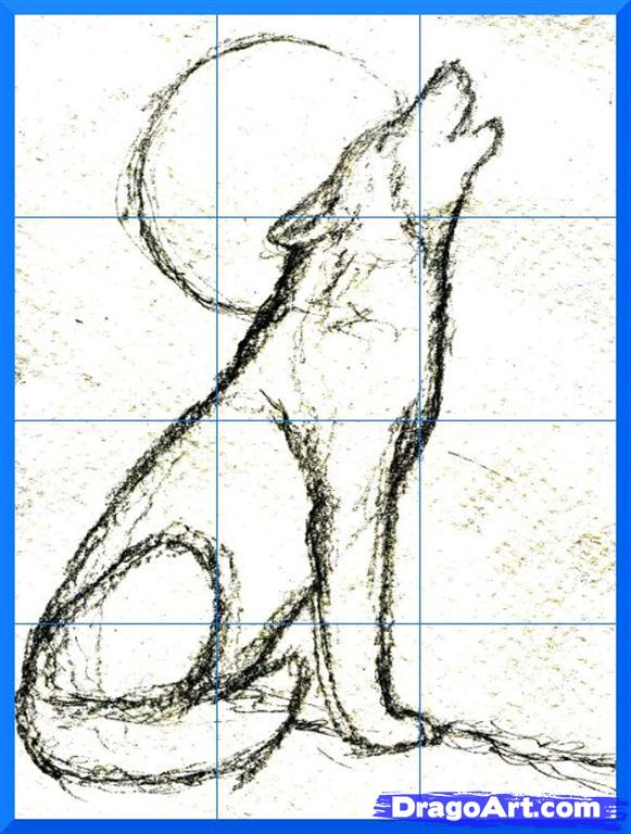 581x768 How To Draw A Howling Wolf Step 6 Drawings Wolf
