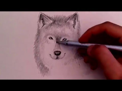 480x360 How To Draw Realistic Wolf (For Beginners!)
