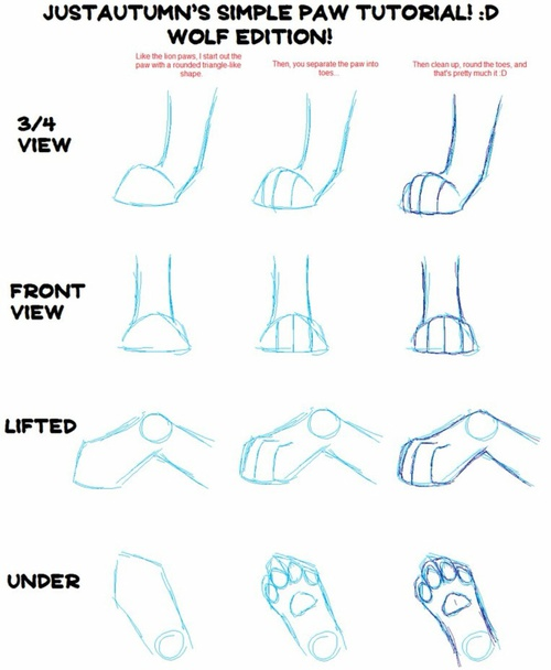 500x608 How To Draw Realistic Wolf Paws! D On We Heart It