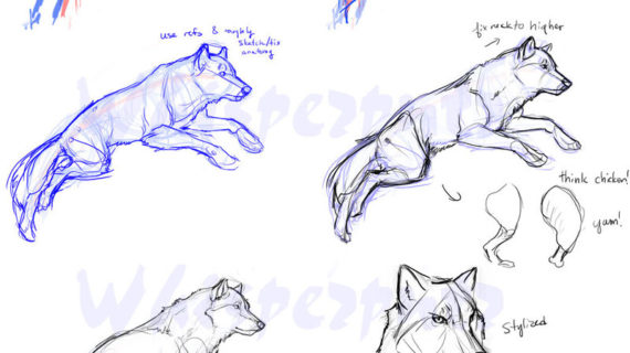 570x320 Realistic Wolf Drawing Tutorial How To Draw A Realistic Wolf