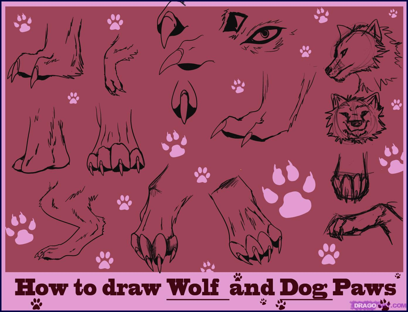 1392x1065 Realistic Wolf Drawing Tutorial How To Draw Wolf Paws, Step By