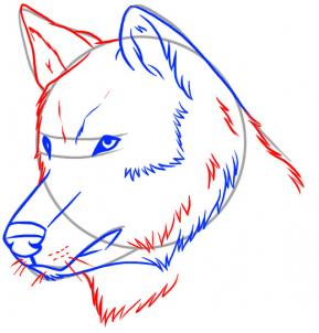 289x302 How To Draw A Realistic Wolf Step 4 Drawing Wolf