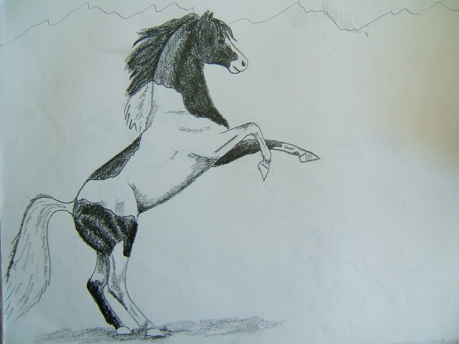 900x675 Pencil Drawings Of Horses Rearing Rearing Horse By ~ginnylynch