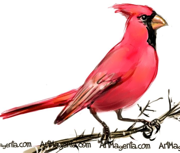 723x615 Birds Northern Cardinal