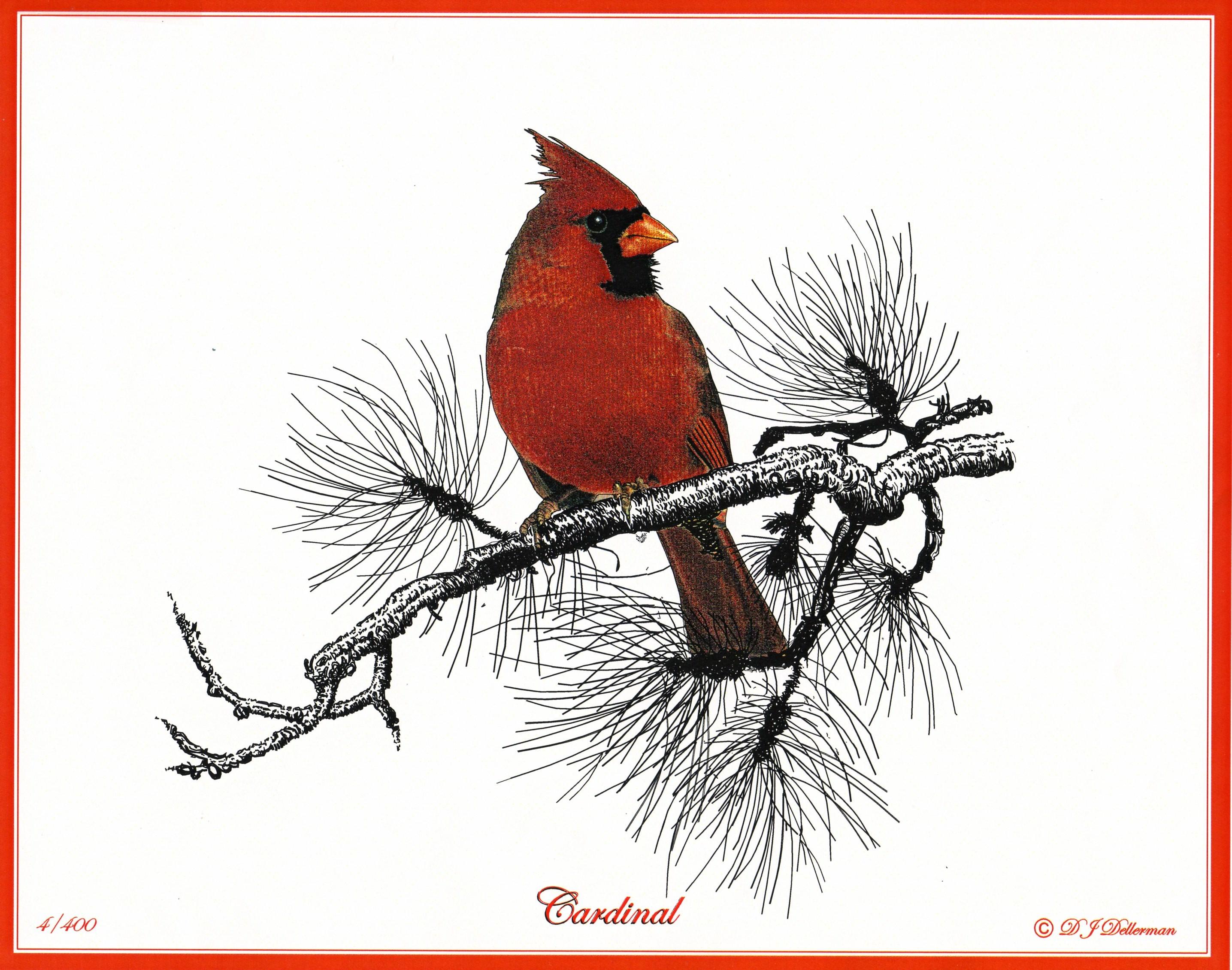 2871x2261 Cardinal Bird Drawing Beautiful Bird Pencil Drawings, Art
