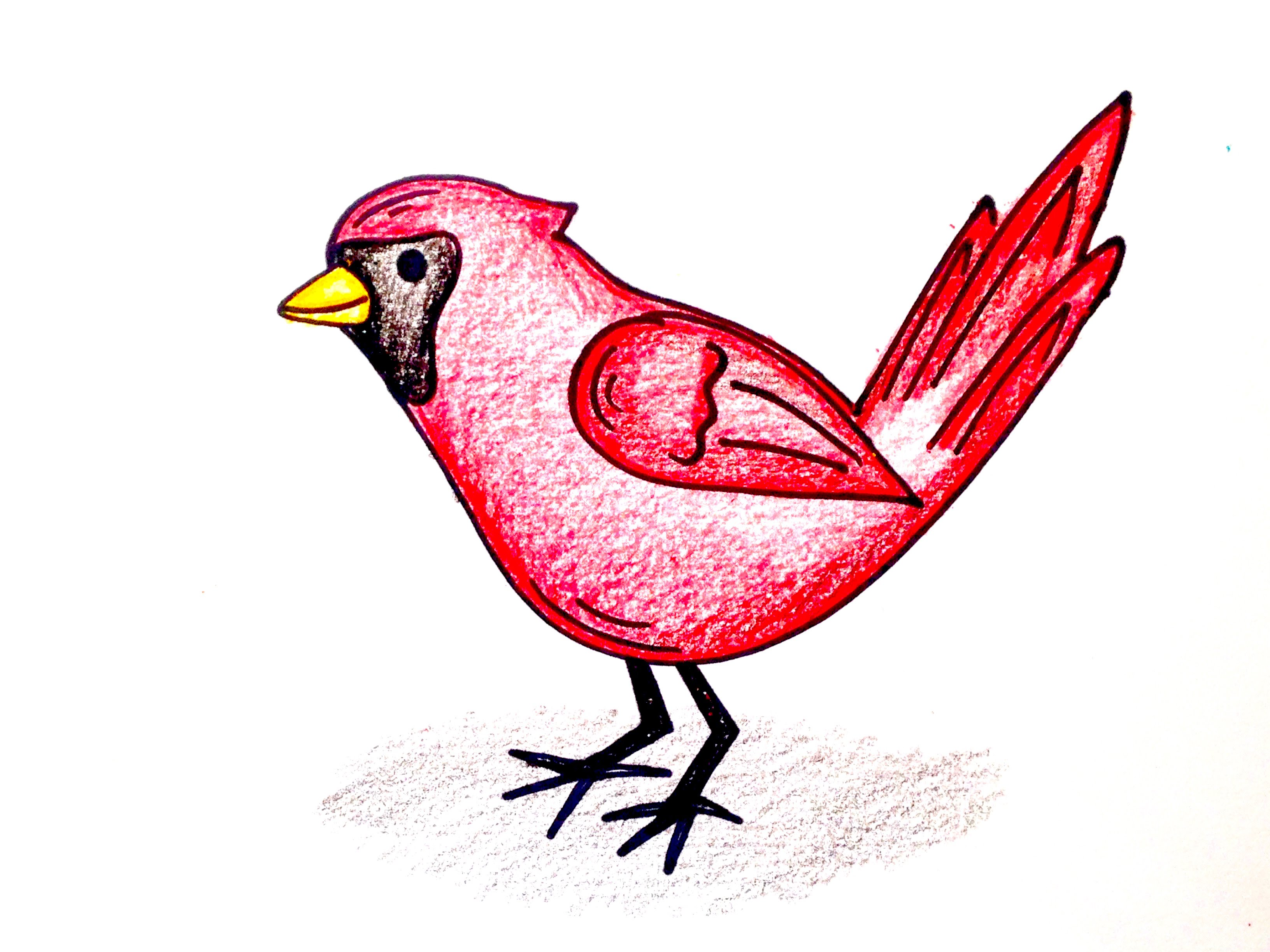 3264x2448 Drawing Lesson How To Draw A Cardinal