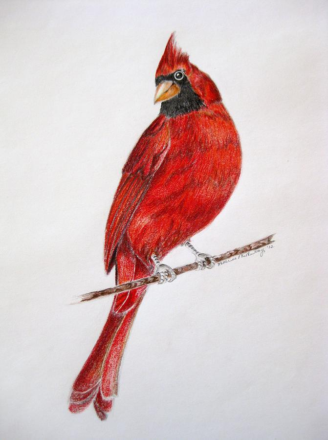 671x900 Happy Cardinal Drawing By Kathrine Mcmurray
