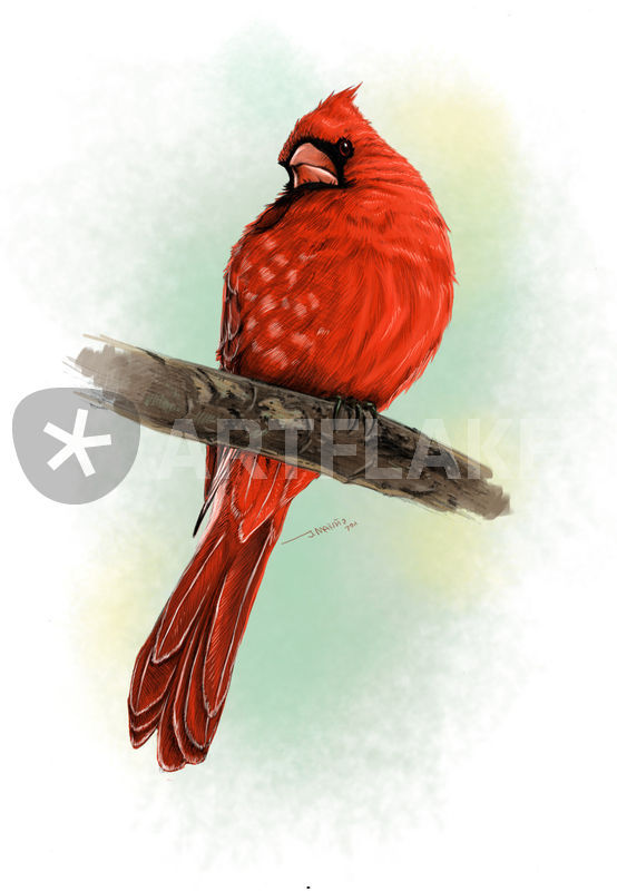 554x800 Red Bird Drawing Art Prints And Posters By Daborien