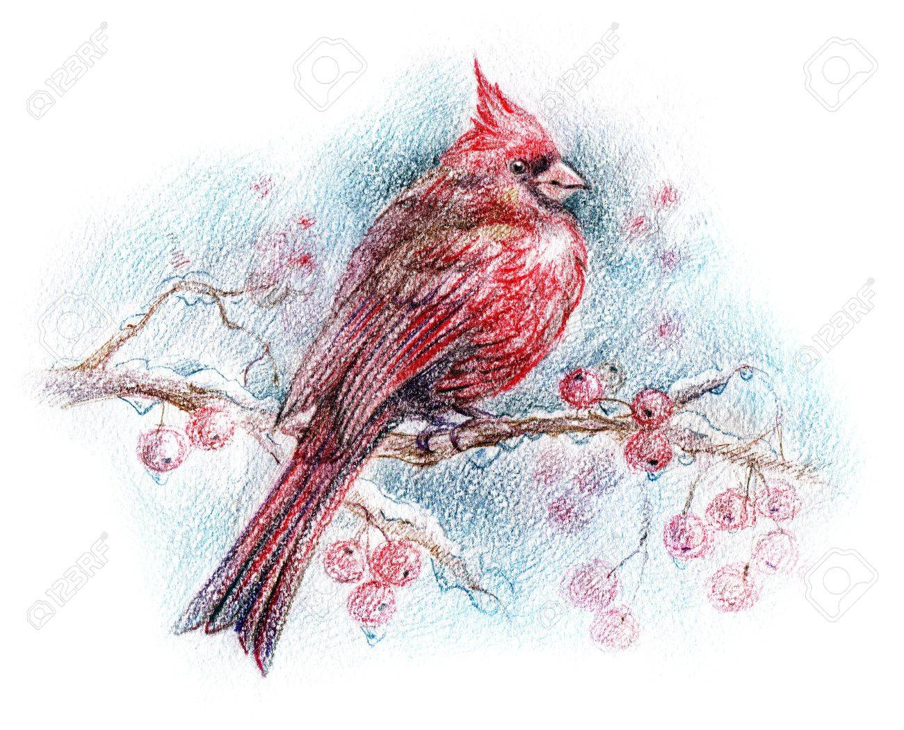 1300x1050 Red Bird On A Branch Drawing Stock Photo, Picture And Royalty Free
