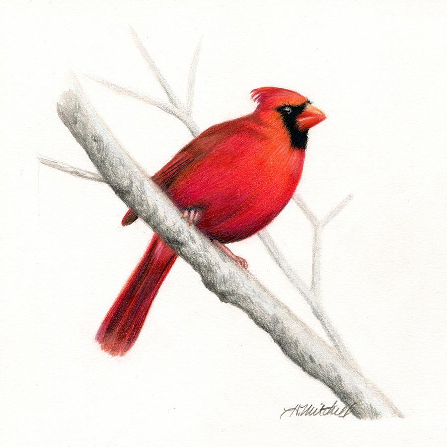 900x900 Winter Cardinal Bird Drawing By Heather Mitchell