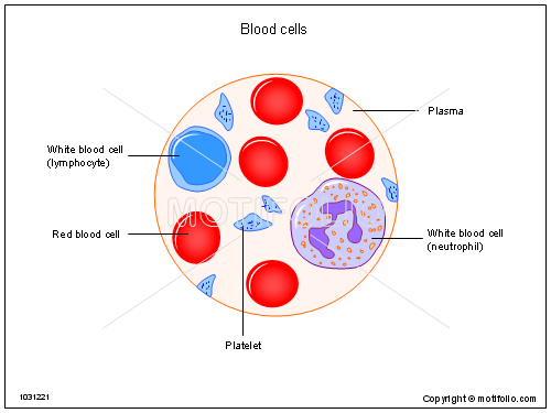 diagram of inside blood diagram of inside the lungs red blood cells drawing at getdrawings.com | free for ... #11