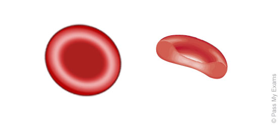 Red Blood Cells Drawing At Getdrawings Free For Personal Use
