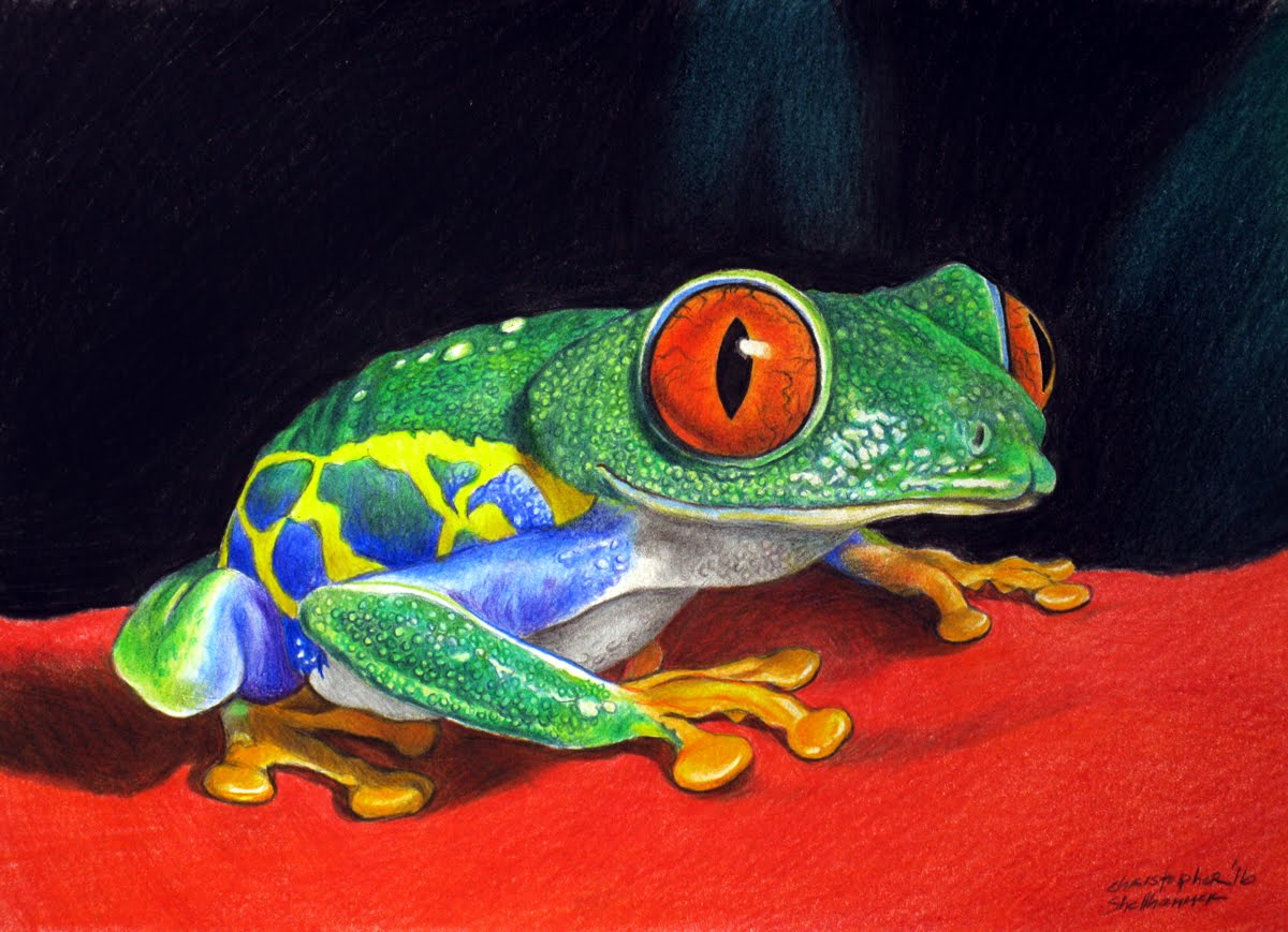 Red Eyed Tree Frog Drawing at GetDrawings.com | Free for personal ...