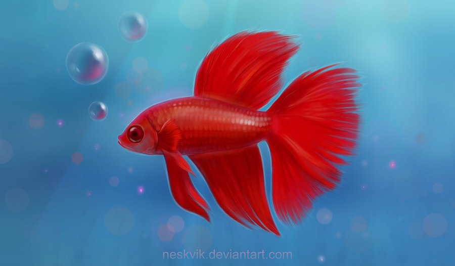 900x526 Red Fish By Neskvik On Red Passion Red