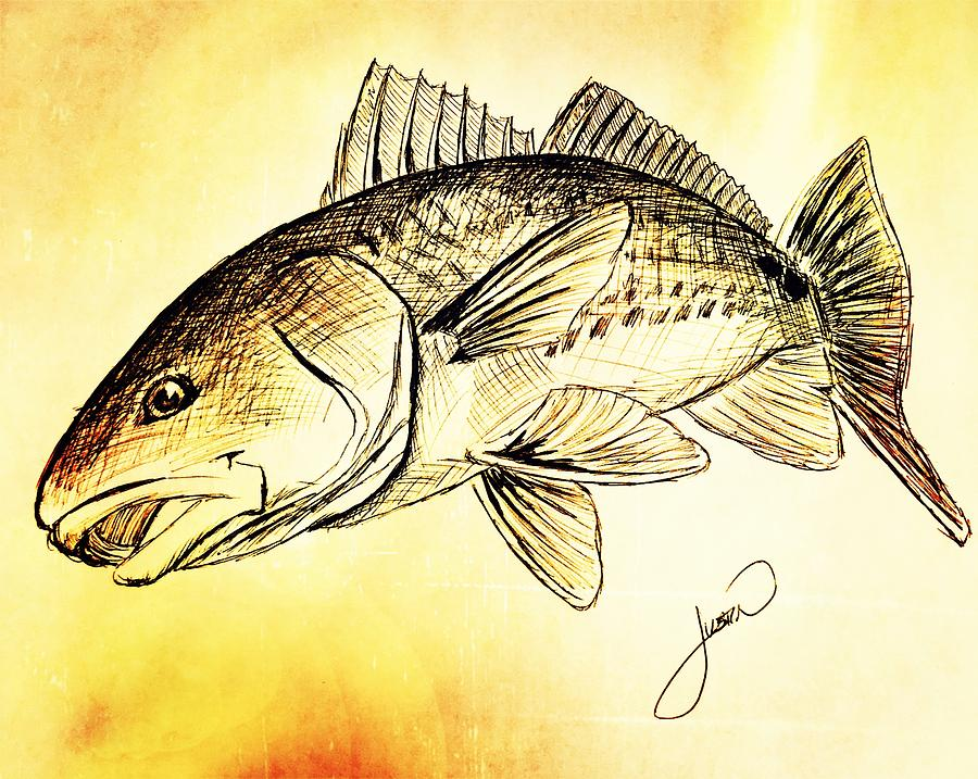 Red Fish Drawing At Getdrawings Free For Personal Use Red Fish