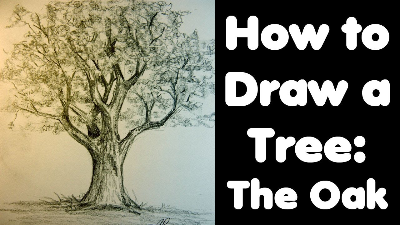1280x720 How To Draw A Tree The Oak