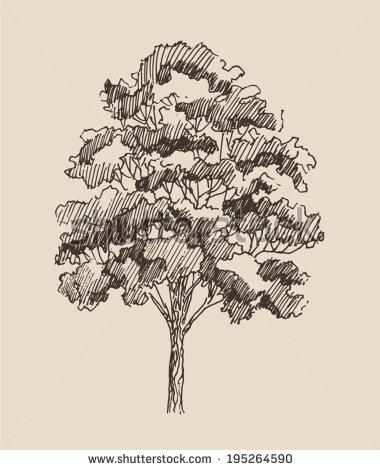 380x470 Red Oak Tree Sketch