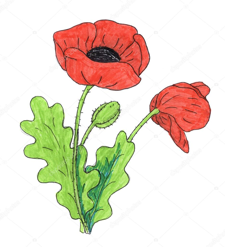 Red poppy flower drawing at getdrawings free for personal use 936x1024 poppy flower drawing stock photo nadyaus mightylinksfo