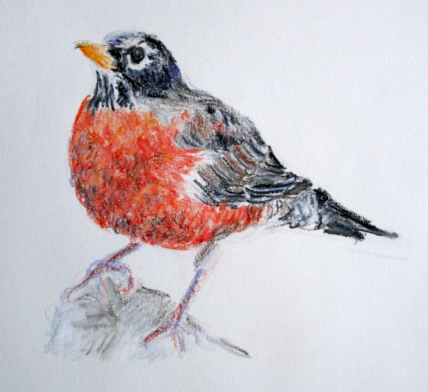 red robin bird drawing at getdrawings com free for personal use