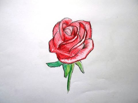 480x360 How To Draw A Realistic Red Rose (Easy Way Drawing)