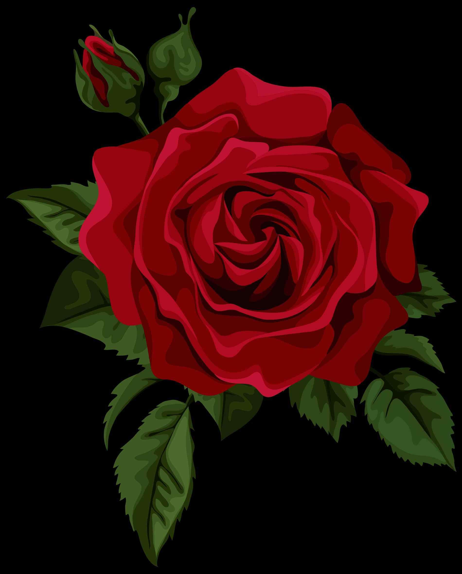 1900x2361 Red Rose Drawing Png Red Rose Png Clipart Image Roses